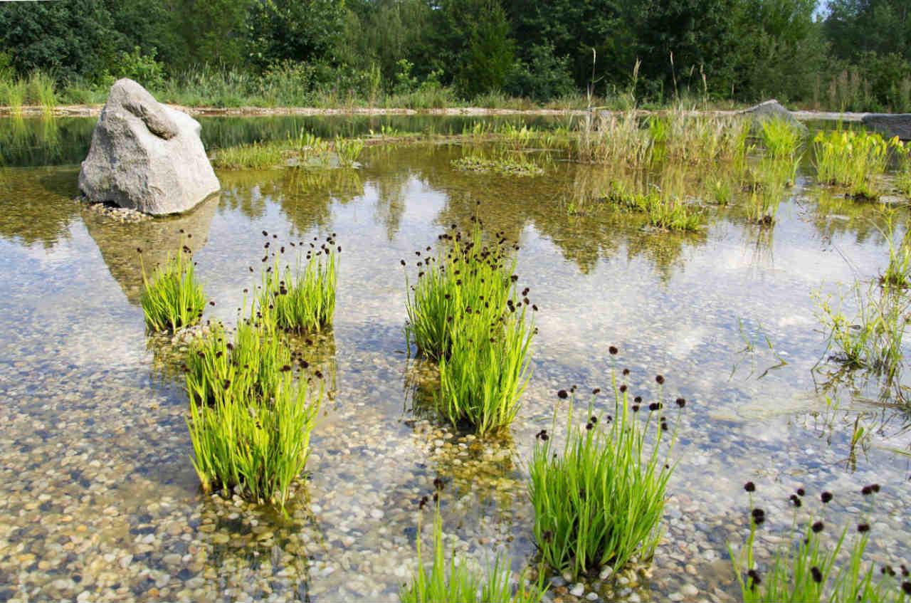 staw kąpielowy - strefa z roslinami wodnymi