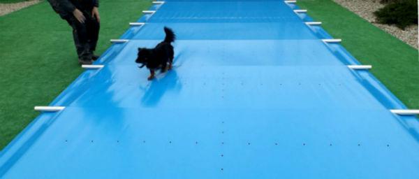 przykrycie basenowe bezpiecczne dla psa