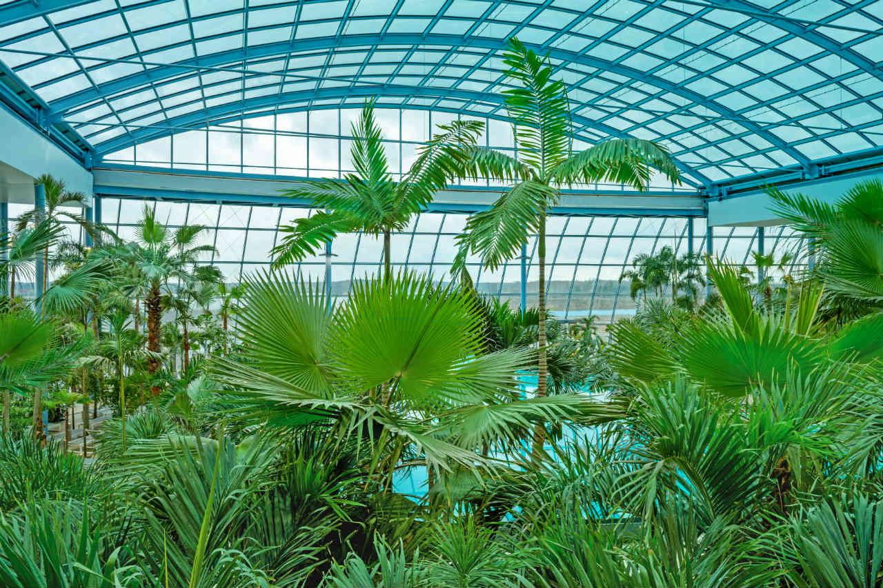 palmy Suntago Wodny Świat